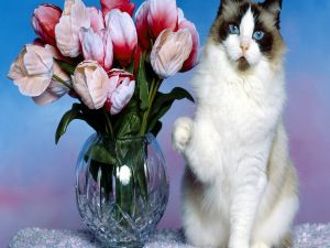 A cat and a vase with flowers
