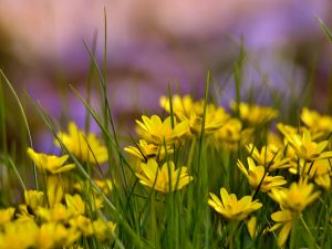 Yellow little flowers and green grass