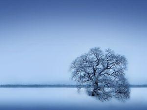 A tree in the snowy esplanade