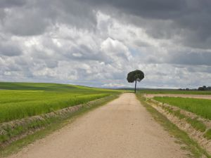 A tree at end of road