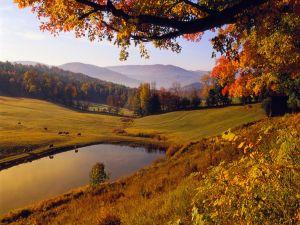 Animals grazing in autumn
