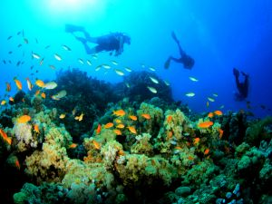 Sports scuba diving between fishes of colors