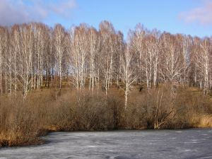 Group of trees near the water in winter