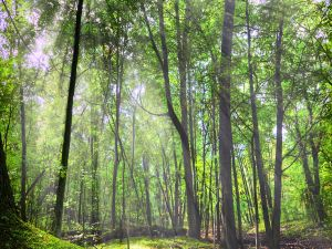 Green forest illuminated by the sun