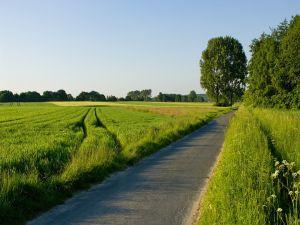 Narrow road in a green field