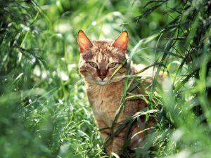 Cat among green plants