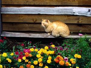 A cat and flowers