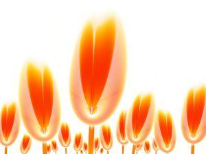 Digital orange tulips