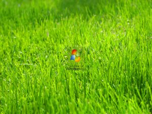 Windows Vista logo on the green grass