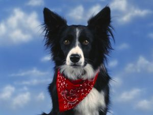 Dog with a red scarf