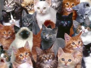 Many different cats