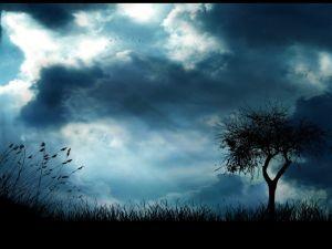 Birds in bluish sky
