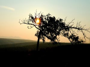 Tree in front of the sun