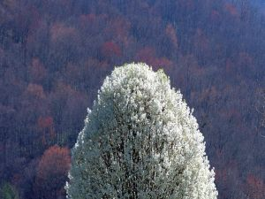 Tree with white flowers in autumn