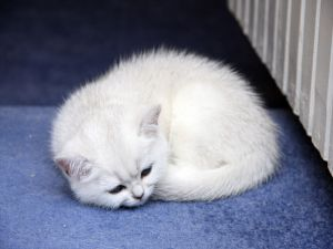 Kitten curled up