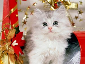 Kitten along to Christmas decoration