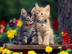 Two kittens with collars