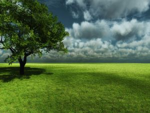 The shade of tree over grass