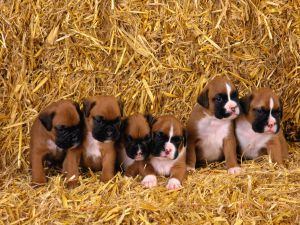 Some puppies with the pink snout