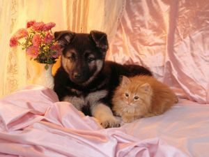 Dog and cat over a pink bed