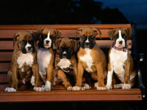 Dogs over a wooden bench