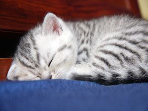 Kitten with striped asleep