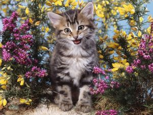 Happy kitten among flowers