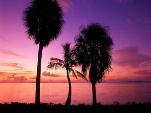 Three palm trees by the sea