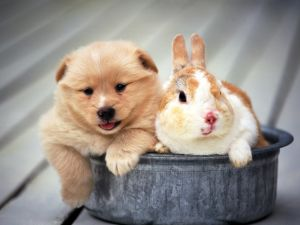 Rabbit with a dog