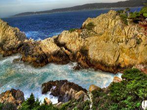 Vegetation on the sea rocks