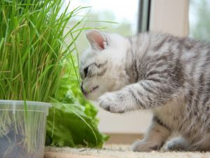 Curious cat with the plants