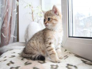 Kitten near the window