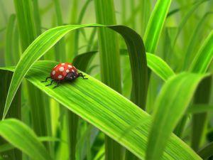 Robot ladybug