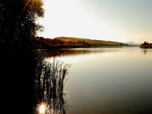 Sunlight between lake vegetation