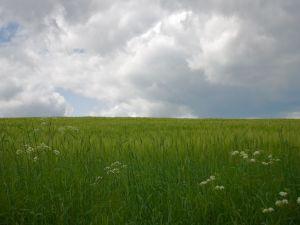 Green plants in the field