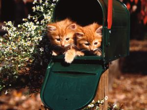 Kittens in the mailbox