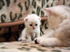 Kitten looking at mom