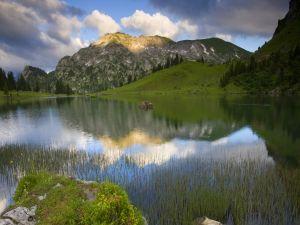 Vegetation in the lake water