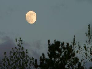 The full moon in the sky at nightfall