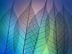 Transparent leaves