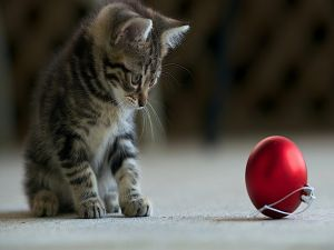 Kitten looking at a red Christmas ball
