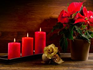 Flowers and red candles for Christmas
