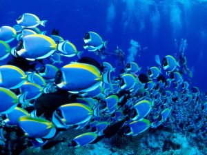 School of fish and divers