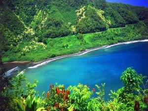 Abundant vegetation in the seashore