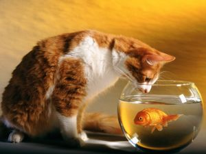The cat look the fish
