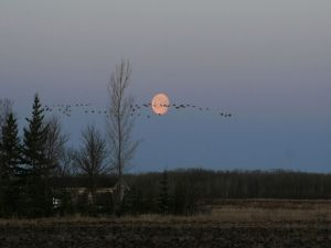 The moon and birds in the sky