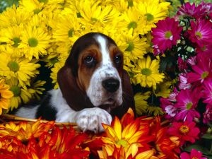 Dog in a basket with flowers