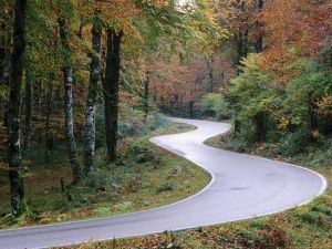 Road with curves in the forest