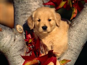 Puppy on tree