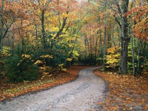 Narrow road seen in autumn